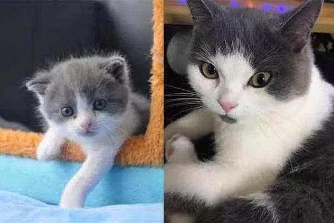 左為複製貓大蒜,右為已故被複製的貓。取材自科技日報