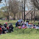 挽救櫻花樹 華盛頓特區將改變養樹策略