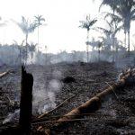 人類浩劫!亞馬遜森林大火連燒21天