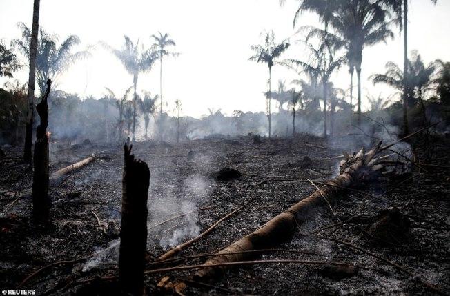 巴西新總統不相信氣候變遷說,巴西伐木情況變本加厲。這是20日在亞馬遜雨林內人為火燒山,進行砍伐。(路透)
