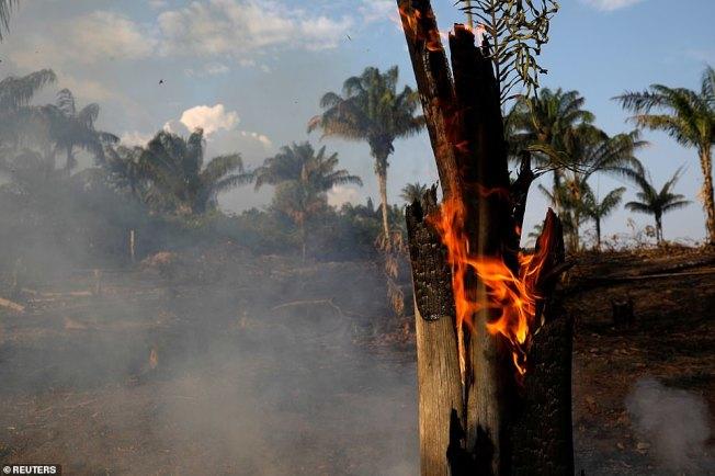 巴西總統波索納洛不相信氣候變遷說,巴西伐木情況變本加厲。這是20日在亞馬遜林區的人為火燒山,以便進行砍伐。(路透)