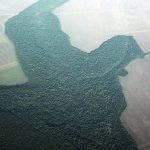 生態瑰寶、3400萬人家園 最大雨林 持續消失中…