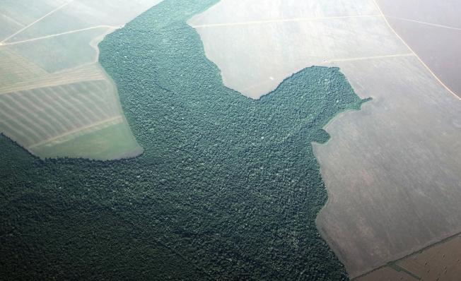 在巴西Alta Foresta市附近的森林已被砍伐成農田,空視圖顯示灰白地塊為農地。(路透)