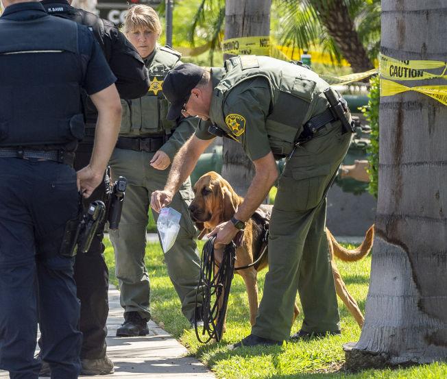 加州富樂頓州大校園19日發生命案,動用警犬協助緝兇。(美聯社)