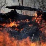 憂亞馬遜大火引發抵制潮 巴西自家企業群起抗議