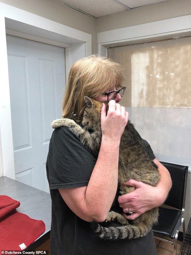 紐約的威爾茲夫婦十餘年前領養公貓「泰戈」,但牠三歲時走失,沒想到11年後團圓。(取自YouTube)