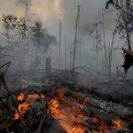 痛心疾首!除了巴西 這些國家也正焚燒亞馬遜雨林