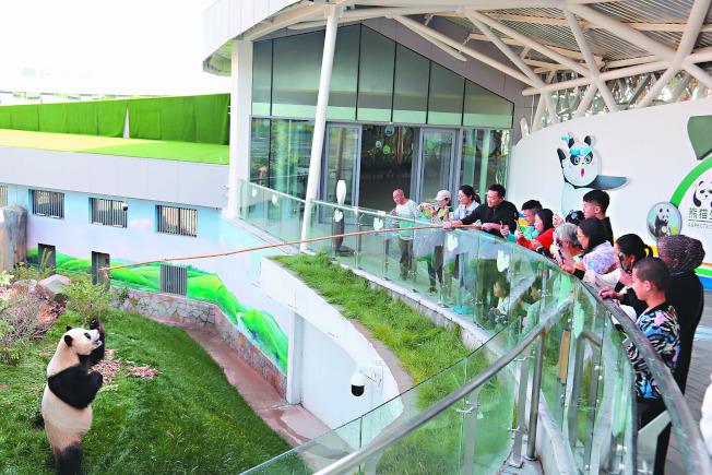 西寧大熊貓館是青藏高原首個大熊貓館,也是目前中國最大的單體熊貓館,自6月開館以來,接待遊客量突破25萬人次。(中新社)