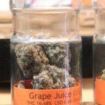 藥用大麻若進校園 灣區反麻人士憂濫用