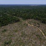 巴西NGO:近一年亞馬遜森林砍伐 增加16%