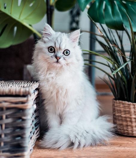 找到你家的貓討厭的精油香味。(Photo by Rana Sawalha on Unsplash)