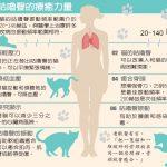 1張圖貓咪「咕嚕」聲 竟有降血壓、癒合骨折等奇效