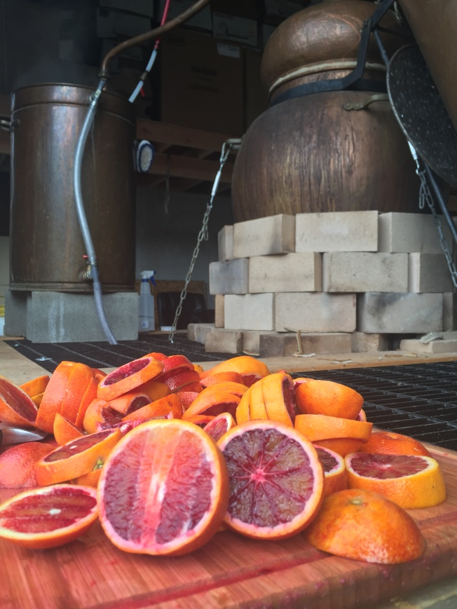 血橙正在萃取精油。(作者提供)