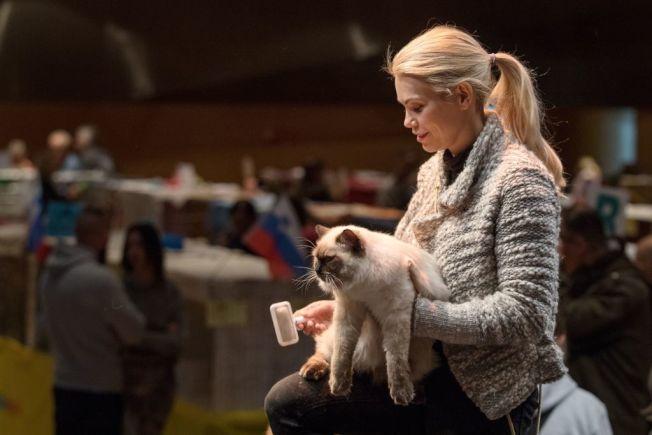 動物飼主應給獸醫更多同理心。 (Getty Images)