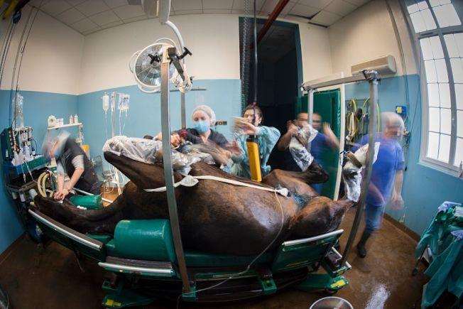 安樂死是否讓動物得以解脫的人道處理,某些獸醫有不同看法。(Getty Images)