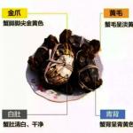 引進「大種苗」 今年陽澄湖大閘蟹可能更肥美