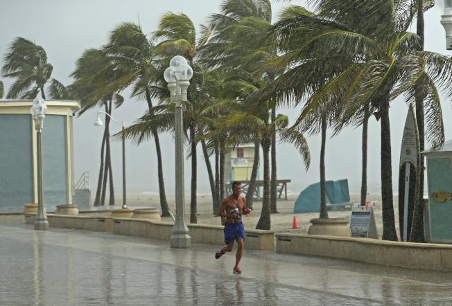 佛州沿岸好萊塢市的棕梠樹31日已感覺到颶風即將來臨。(美聯社)
