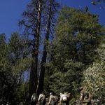 加州大麻合法化 國家森林遭殃