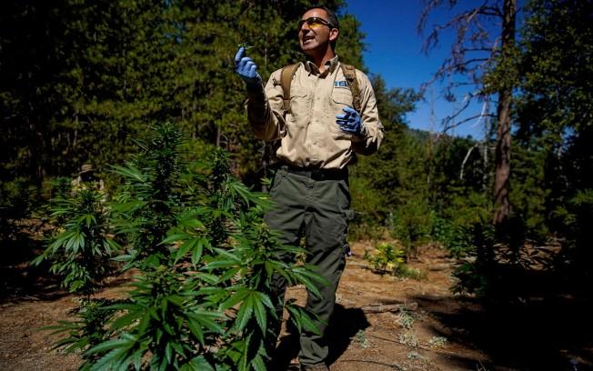 整合生態研究中心聯合主任Mourad Gabriel進入Sierra National Forest非法種植大麻場。(洛杉磯時報)