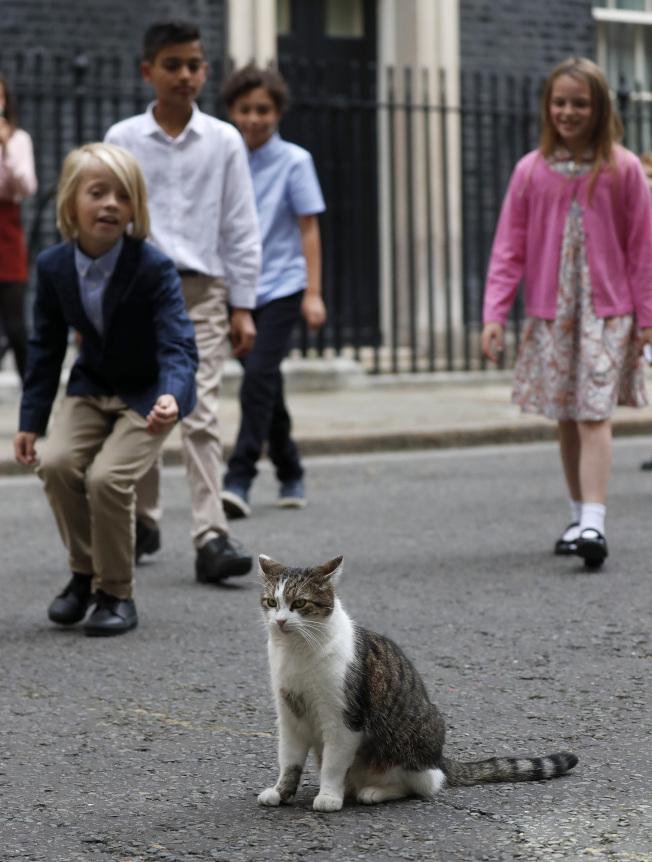 英國第一貓賴瑞。(美聯社)