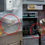 噁!速食店老鼠橫行 跳進油鍋變「炸鼠條」