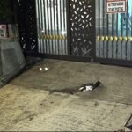 黎智英寓所 遭黑衣人擲汽油彈