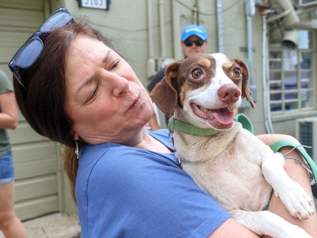 Lucky Dog收容所近日收留了來自南卡的19隻流浪狗。(Lucky Dog收容所提供)