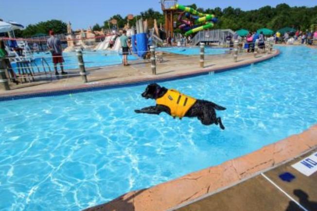 想讓犬子犬女們過癮戲水?9月7日瑞斯頓的水樂園專為狗狗開放。(費郡政府網站)