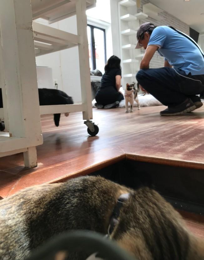 「麵包屑和鬍鬚」為流浪貓營造清潔舒爽的中途之家。(記者許惠敏/攝影)