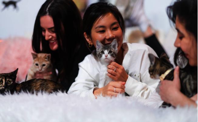 「麵包屑和鬍鬚」提供貓迷們療癒紓壓之所。(Crumbs and Whiskers官網)