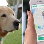 遛狗App恐藏安全風險 賊取得密碼入屋行竊