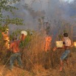 護亞馬遜雨林 7國簽協議