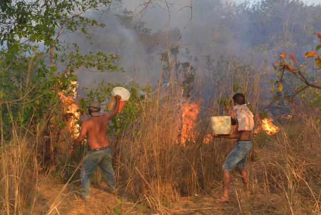 巴西森林大火持續延燒,圖為阿瓜博阿居民4日努力救火。(路透)