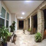 爾灣民宅後院驚見3土狼 華裔居民嚇壞