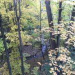 明州逾45人染芽生菌病 少去潮濕樹林