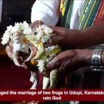 印度中部暴雨成災 祈雨蛙成婚2個月就離婚