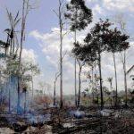 加州徵碳排放費護雨林 全球關注