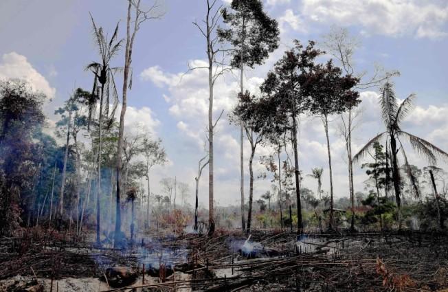 亞馬遜森林大火引發全球對珍貴樹木的重視。本周加州官員考慮是否採用熱帶雨林標準(Tropical Forest Standard,TFS)。(Getty Images)