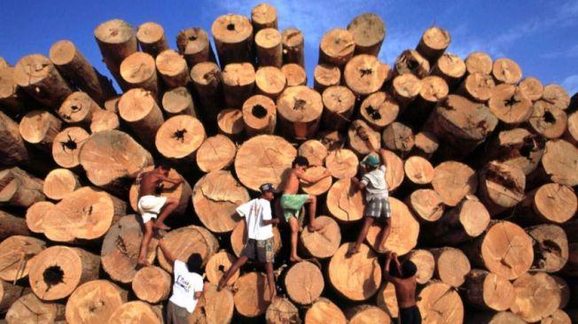 一群巴西兒童,在從亞馬遜森林砍伐下來的原木堆爬上爬下。(美聯社)