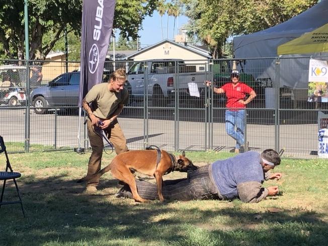 警員和工作警犬保護基金現場為警犬籌款,表演抓捕壞人。(記者劉先進/攝影)
