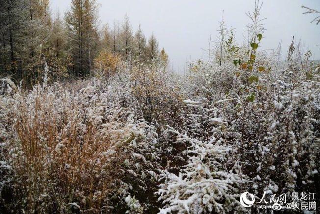 漠河市15日降下今年入秋後的首場降雪。(取材自人民網)