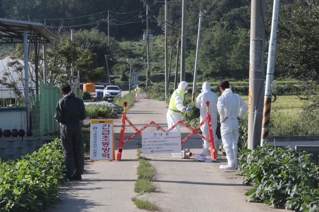 南韓坡州市爆發非洲豬瘟首例,南韓於17日上午進行為期48小時封鎖。(歐新社)