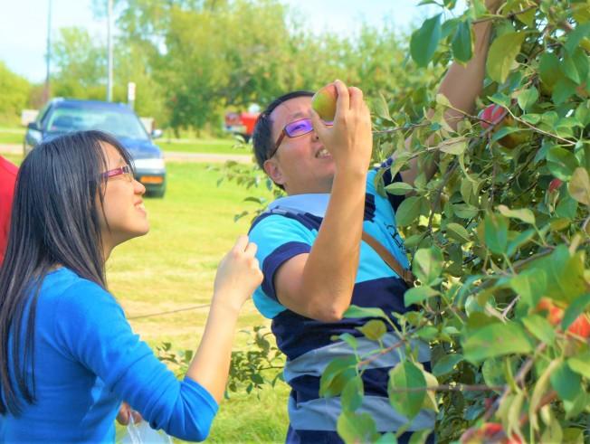 到蘋果園採蘋果,是許多中西部民眾喜愛的秋季活動。(記者陳曼玲/攝影)