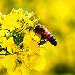 巴西近5億蜜蜂農藥中毒死亡 學者:可能引發食物戰爭