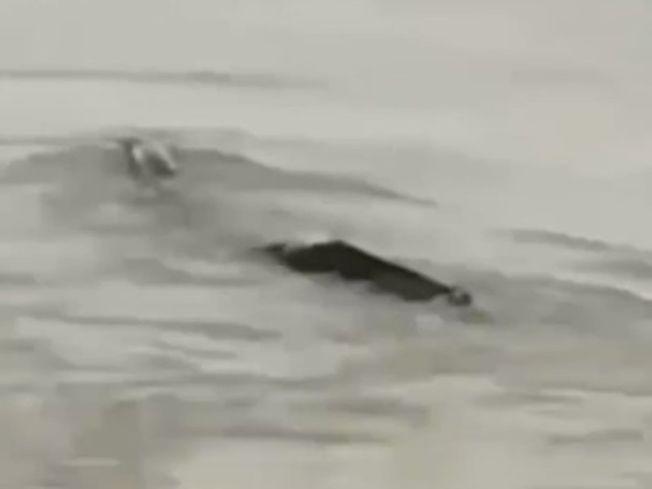 「三峽水怪」在海上漂流。(視頻截圖)