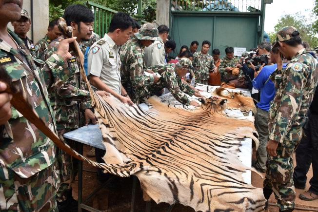 2016年老虎廟掃蕩行動中,被查獲的虎皮。(路透)