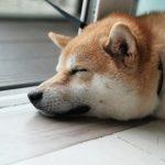丹麥研究:胖子容易飼養胖狗