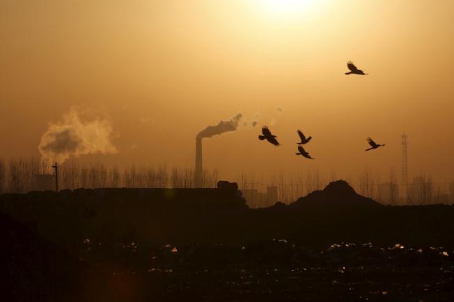 中國過去兩周來的碳排放量至少減少了一億公噸。圖為鳥群飛過中國唐山的鋼鐵工廠。(路透)