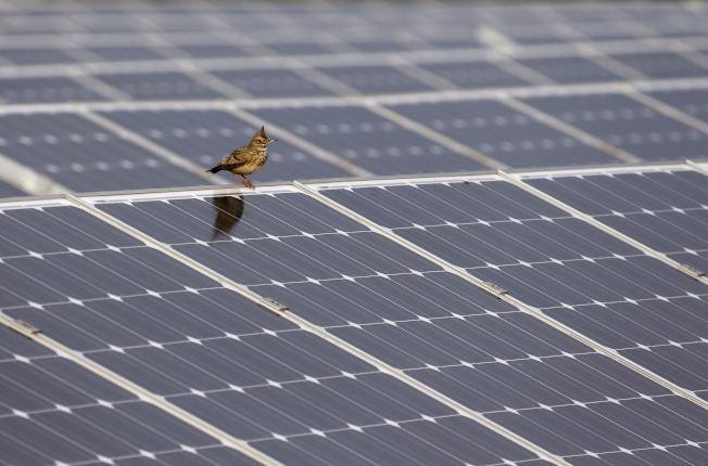 一雙島停在太陽能板上面。(路透)