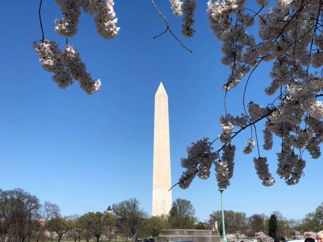 華盛頓紀念碑目前是華府最高的建築。(記者張筠 / 攝影)